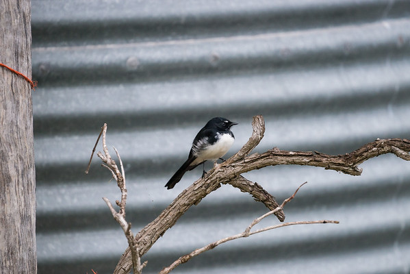 FanTails and WagTails