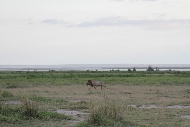 Kenya 2019 #2 1895.JPG