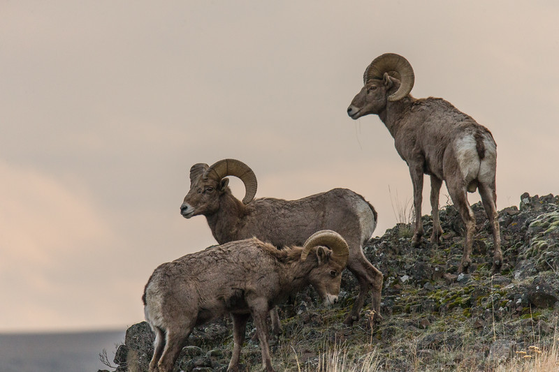 Rams Malaga-7.jpg