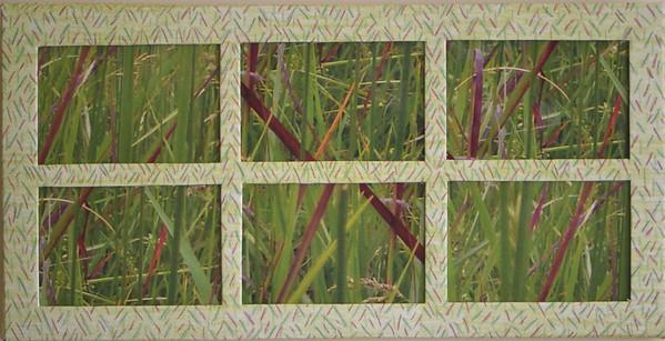 14 Grasses