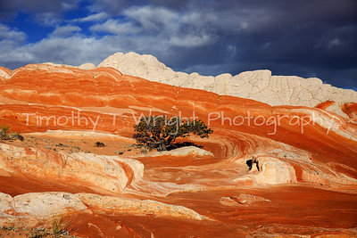 Vermillion Cliffs N.M.