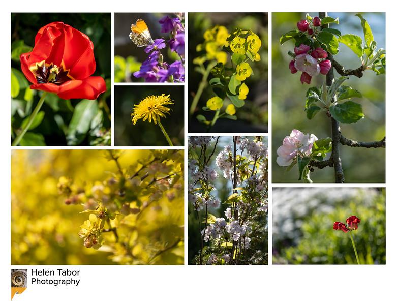 Garden montage.jpg