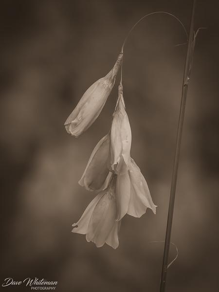 Bell Flower