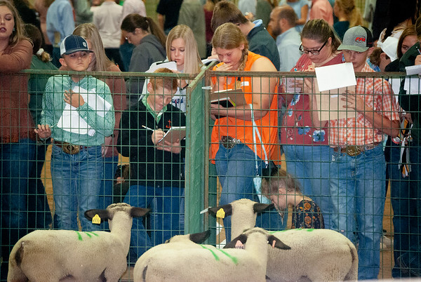 Tulsa State Fair Livestock Judging