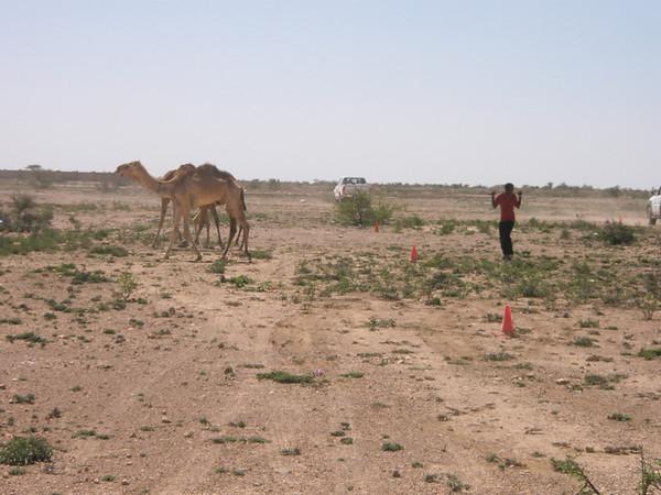SOMALILAND MASTER