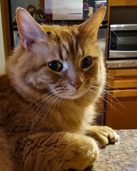 354 (12-28-19) Meet Oscar.jpg