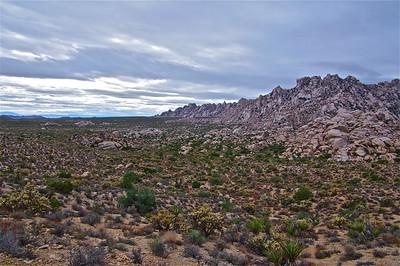 Road Trip - Mojave Preserve & Las Vegas - Oct 5-7, 2011