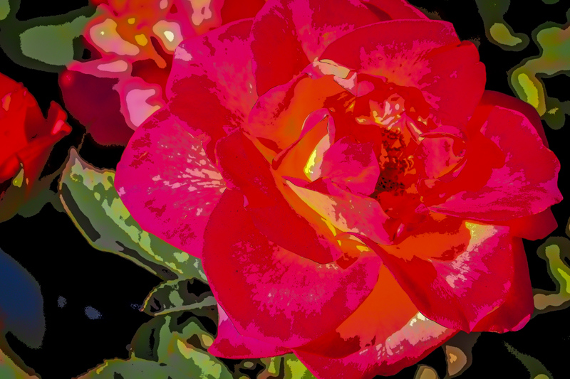 October 3 - A rose and its leaves.jpg