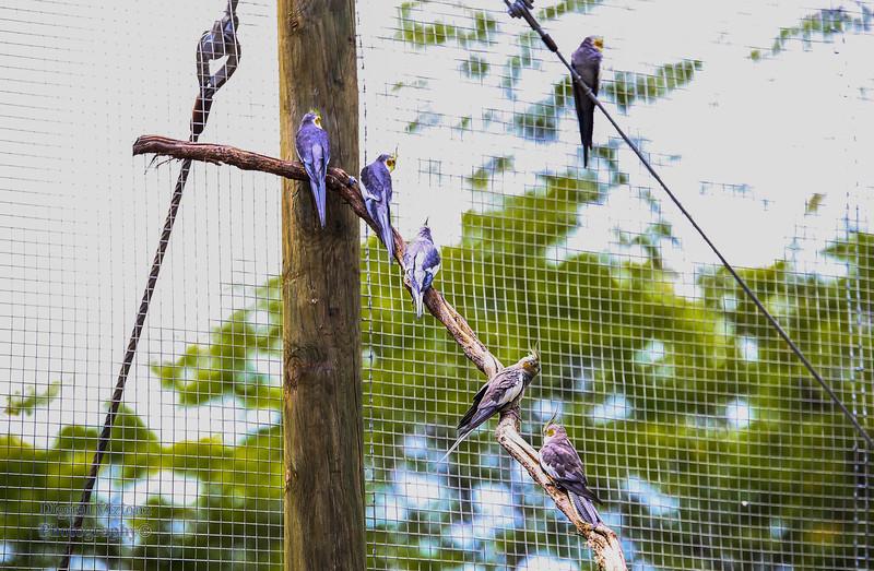 2016-07-17 Fort Wayne Zoo 902LR.jpg