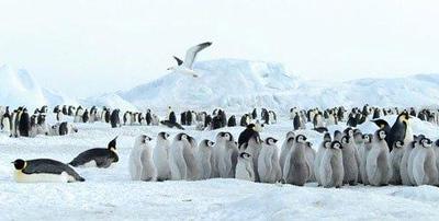 949070557-Antarctica-11.jpg