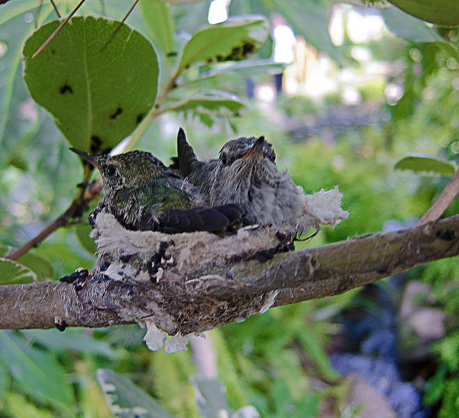 selfrealization humming bird nest.jpg