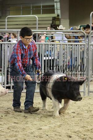 Market Hog Show