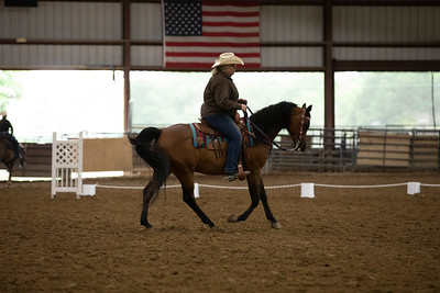 Horse 36