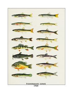 Fish Pints and Fly Fishing Prints Prints