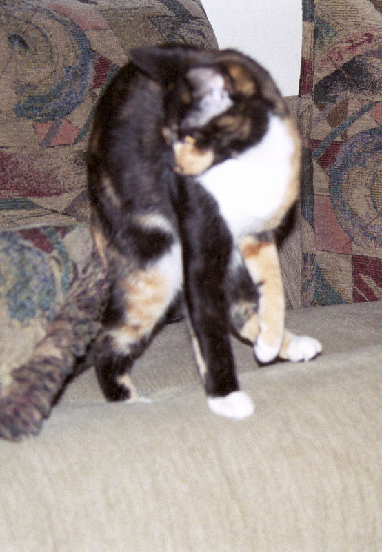 2003 12 - Cats 57.jpg