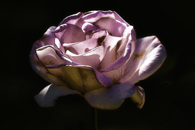 April 28 - Sculpted rose.jpg