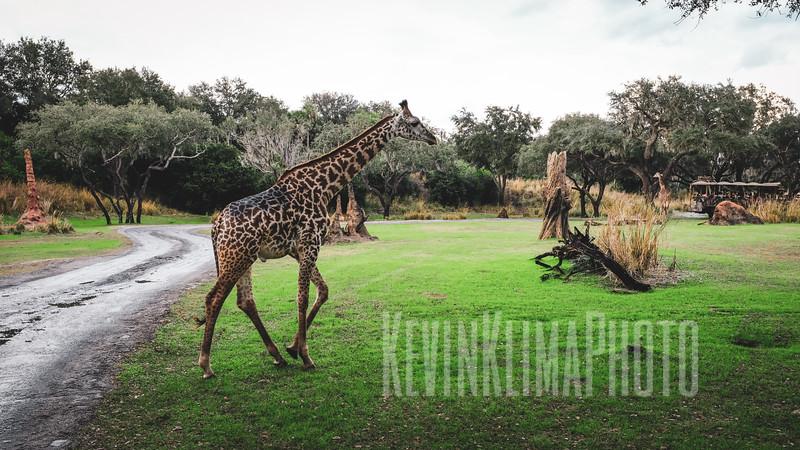 AnimalKingdom2018-146.jpg