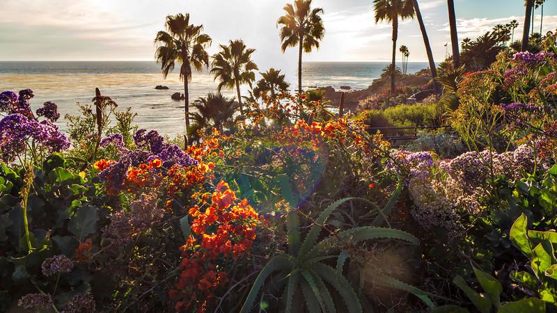 garden west.jpg