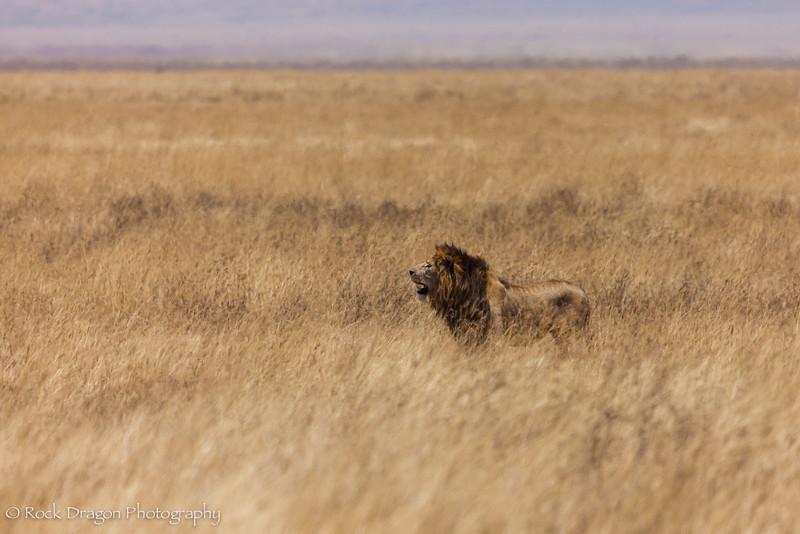 Ngorongoro-66.jpg
