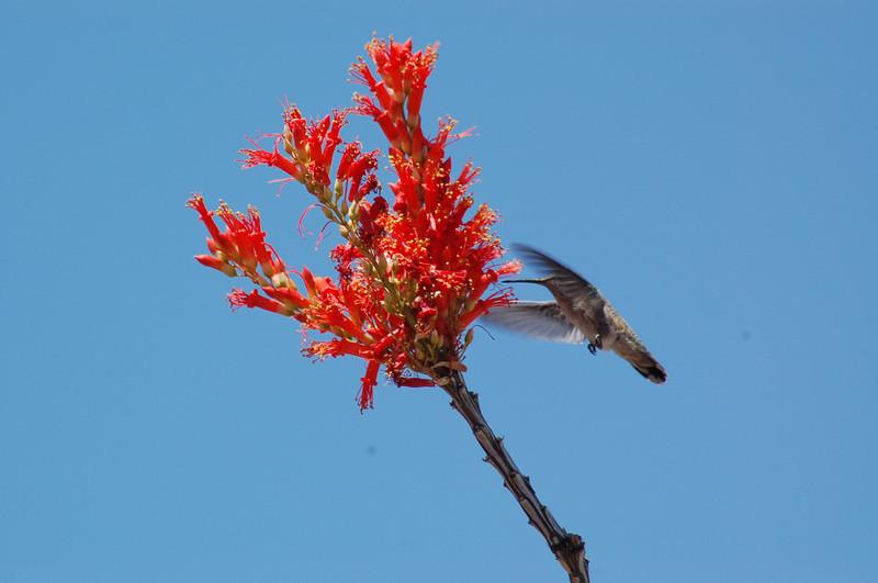 20130425_Hummingbird_002.JPG