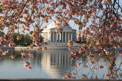 Cherry Blossom Time in DC