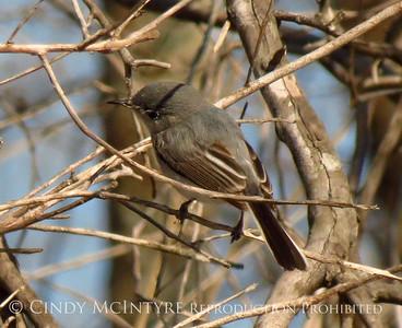 Okefenokee Songbirds