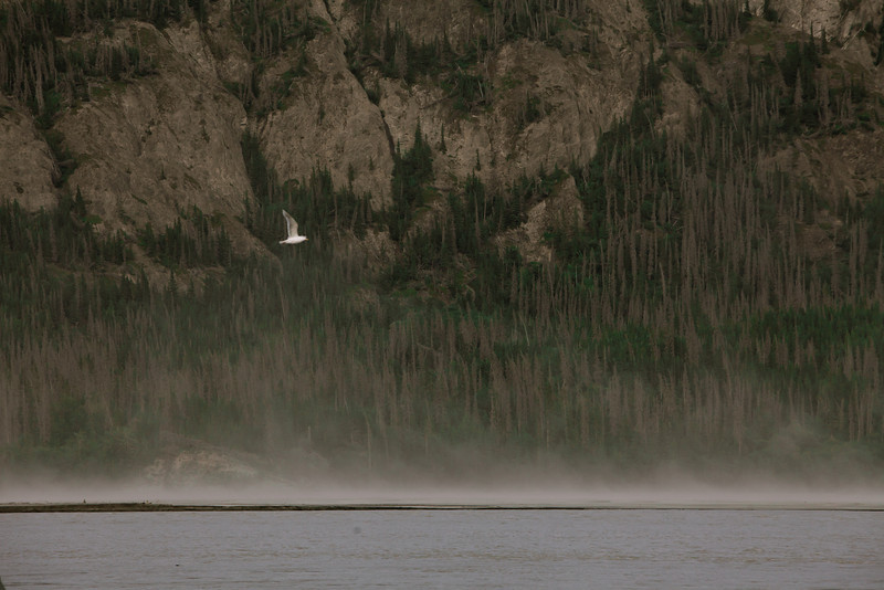 Alaska Copper River-8304.jpg
