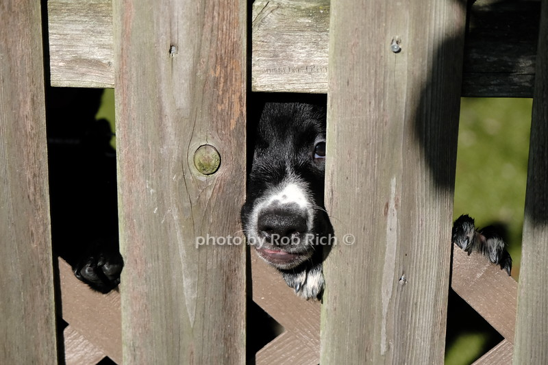 photo by Rob Rich/SocietyAllure.com ©2020 robrich101@gmail.com 516-676-3939