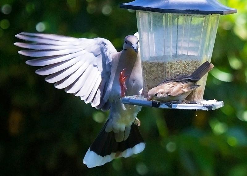 doveandlittlebirddrybrush.jpg
