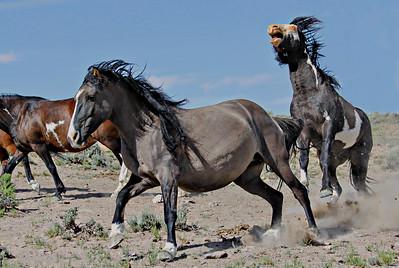 Special Wild Horse Color Prints