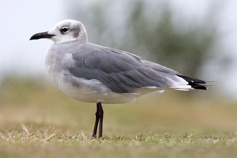 seagull_5031802452_o.jpg