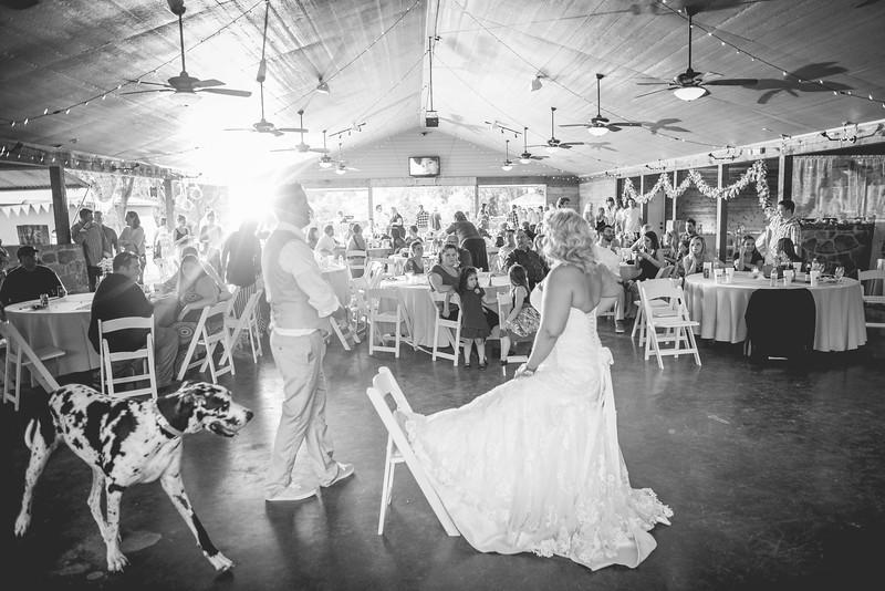 2014 09 14 Waddle Wedding - Reception-724.jpg