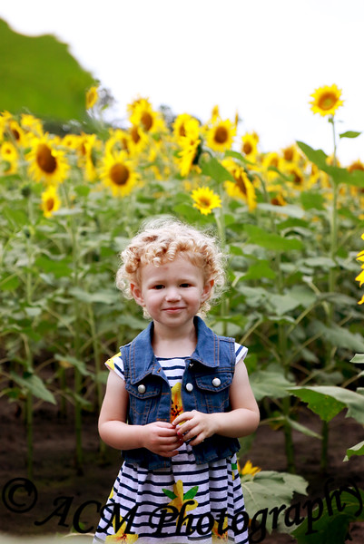 Allie - Sunflower Field