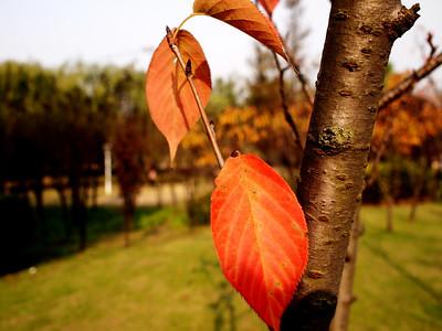 Fall scene, Beijing or Shanghai?