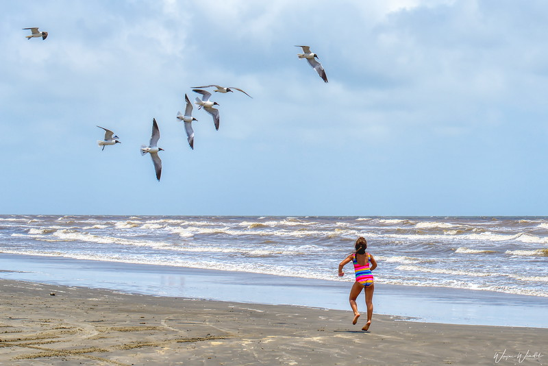 20190620_Galveston_Feeding-the-Birds_750_1867 .jpg