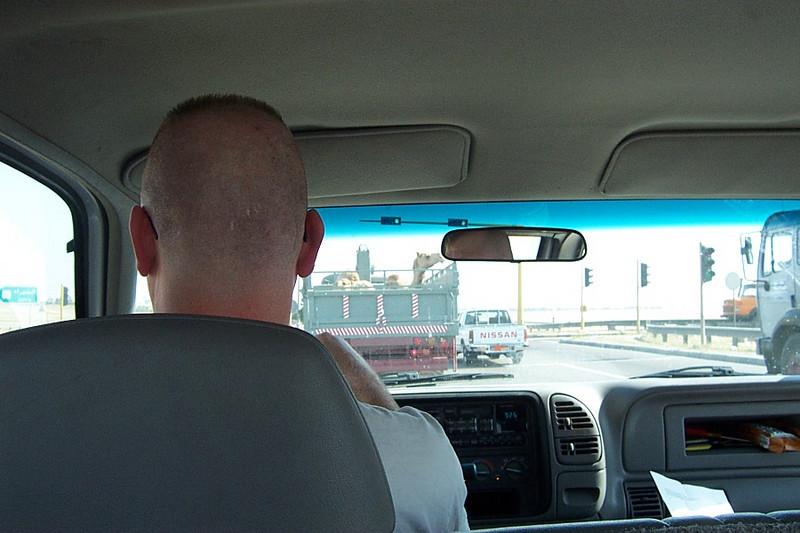Back of Ron's Head.jpg