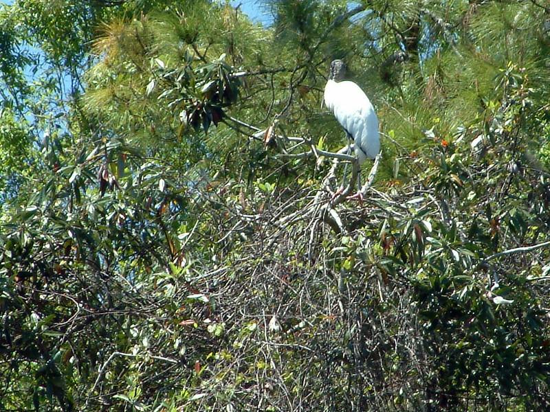 Tarpon Springs FL Wildlife (1).jpg