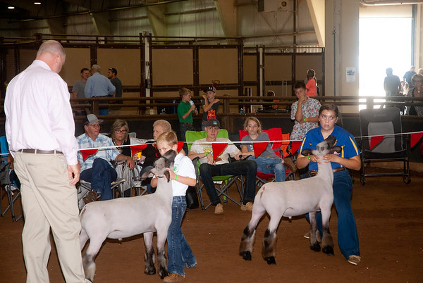 OK State Fair Market Lambs