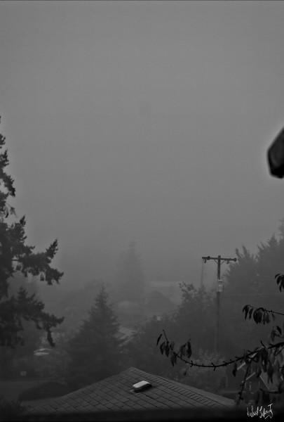 morning fog  bw 2019 copy