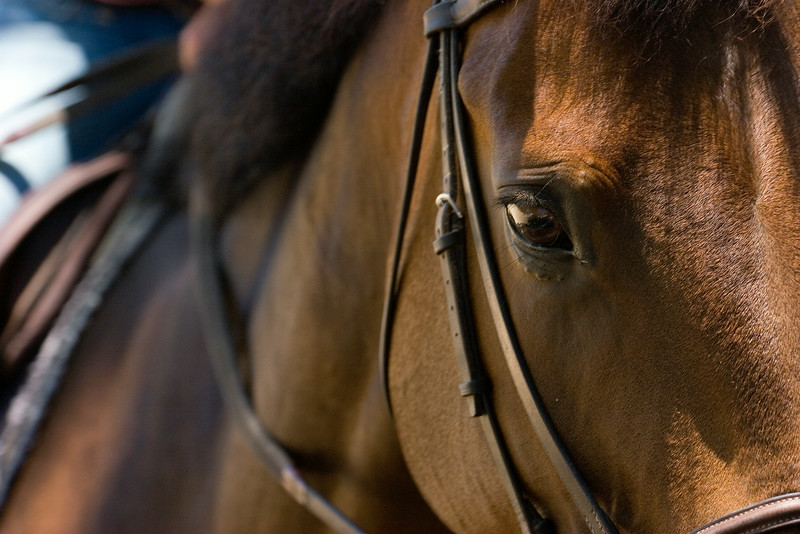 horseeyedelmar.jpg