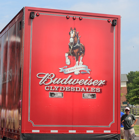 Budweiser Clydesdales in New Hope