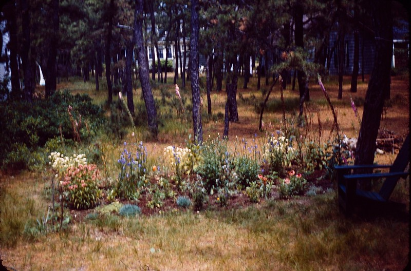 1955 08 Greep's backyard.jpg