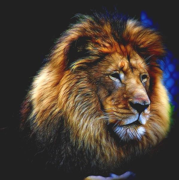 Mysterious Lion.jpg