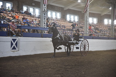 Percheron Ladies Cart