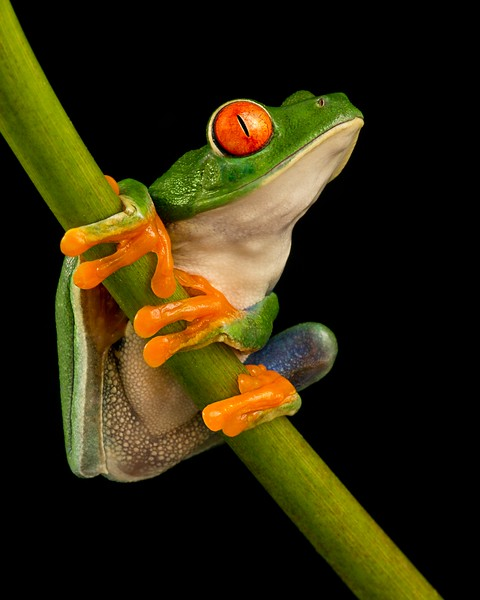 Frogscapes014_Cuchara_2390_021117_164326_5DM3L.jpg