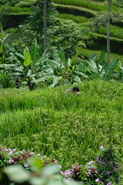 Trip of Wonders Day 11 @Bali 0071.JPG