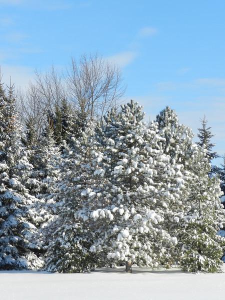 fantastic snow-7146.jpg