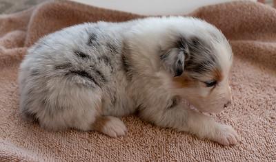 2019-09-01 Foxpointe Puppy 2