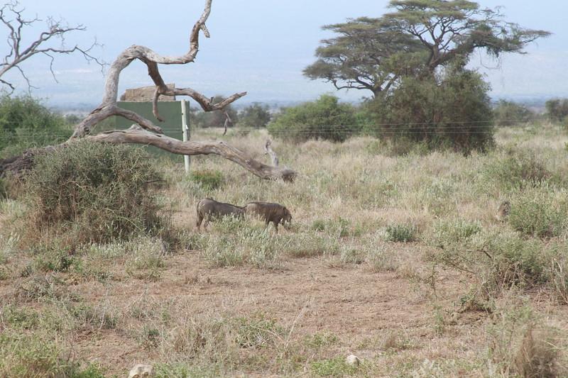 Kenya 2019 #2 716.JPG