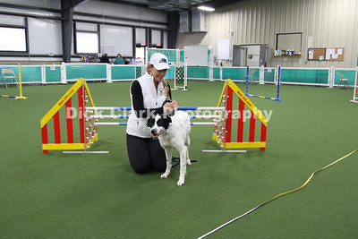 2019-04 Boston Terrier Club Agility Trials at QCDTC
